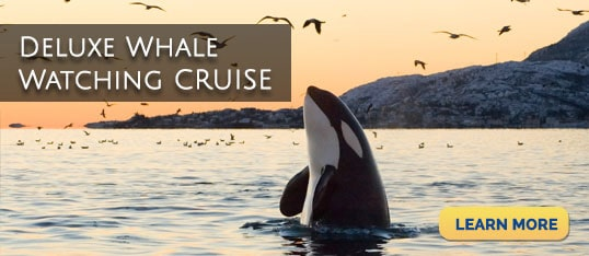Deluxe Whale Watching Cruise