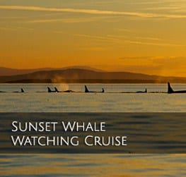 Sunset Whale Watching Cruise