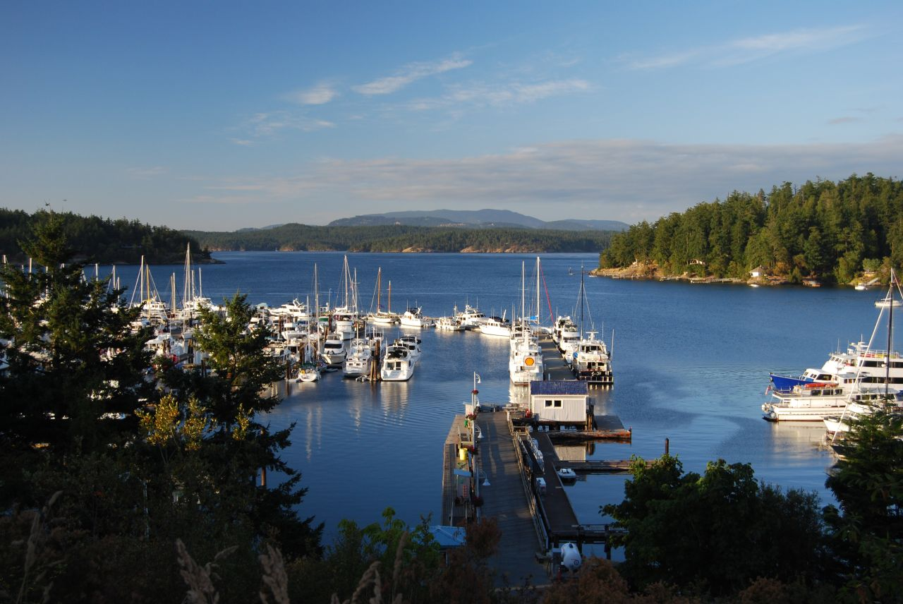 things to do in friday harbor during our deluxe whale watching tour