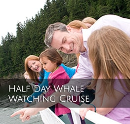 Half Day Whale Watching Cruise