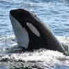 halfdaywhalewatch-thumbnail
