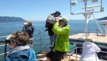 san-juan-cruises-bird-watching-cruise-bird-watchers
