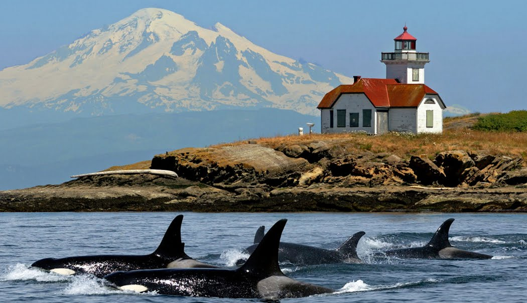 Deluxe Whale Watching Tour Bellingham Wa Whales Com