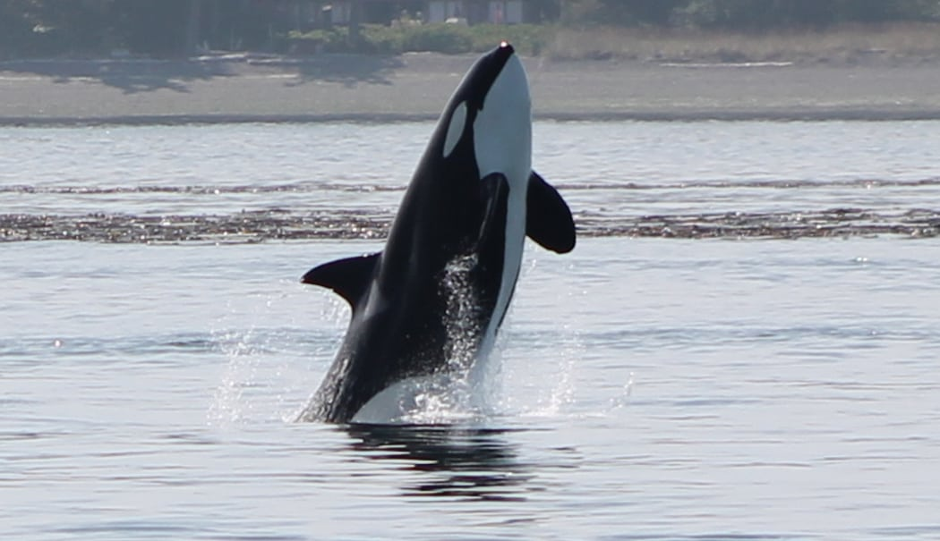 whale trivia