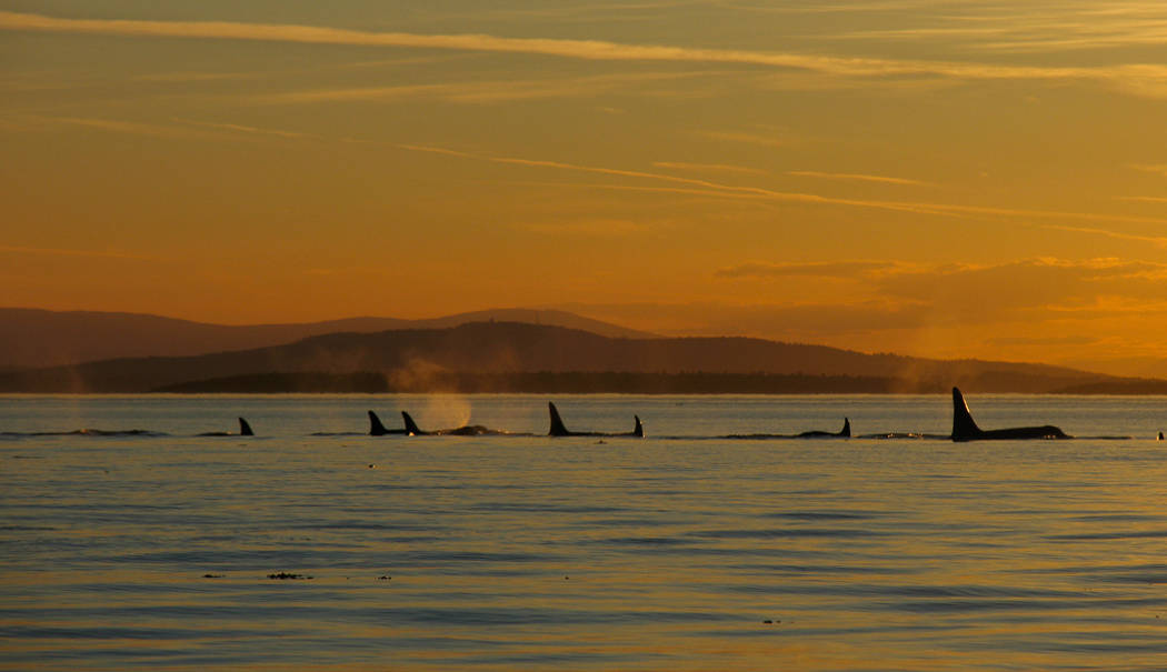 Best Whale Watching Tours In Maine